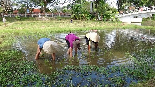 Tanya planting rice at Laman Padi in Langkawi, Malaysia