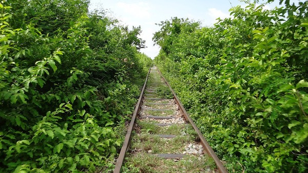 Bamboo Train Tracks Near Battambang