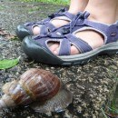 They Breed The Snails Big In Beitou, Taipei, Taiwan