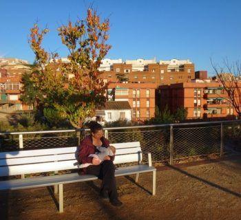 Feeding in the afternoon sun in Horta, Barcelona