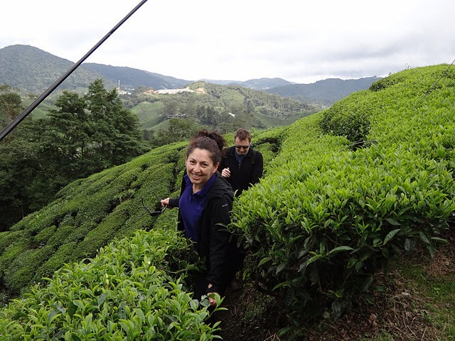 Exploring Ipoh, Tanah Rata And The Cameron Highlands
