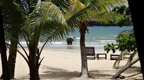 Victory Beach, Sihanoukville - Beach, Buffalo, Deck Chairs