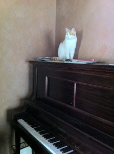Marshmallow On Piano in Gelorup