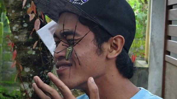 Big Spider Bali
