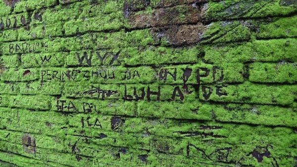 Natural Moss Graffiti In Ubud
