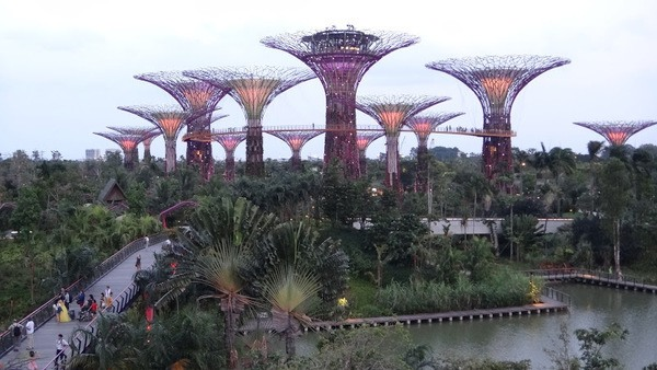 A view of the Gardens By the Bay in Singapore