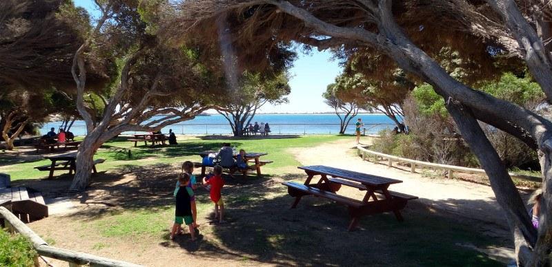 Penguin island picnic area