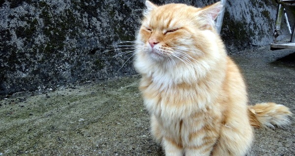 A smiling happy cat at the cat village